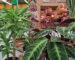 Cuidado de plantas en septiembre